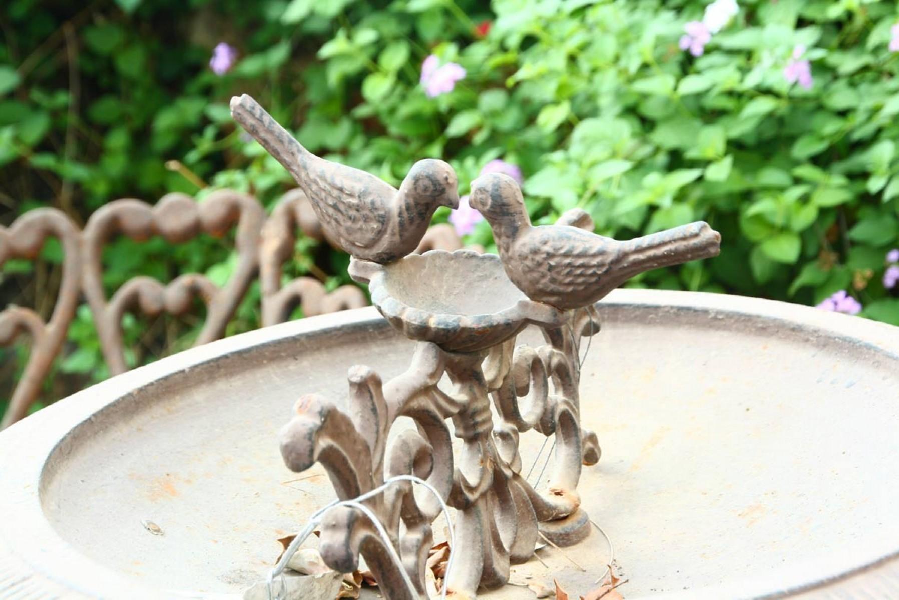 כלי האכלה לציפורים