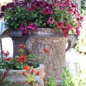 כדים מעוצבים לגינה
